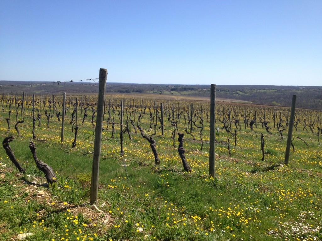 Wijngaarden Chateau de Haute Serre, Cahors